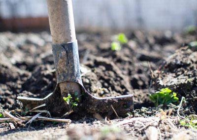 agriculture-backyard-blur-296230