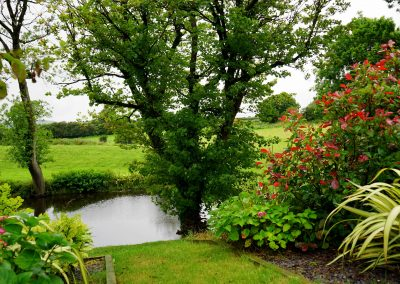 bloom-blooming-country-145685